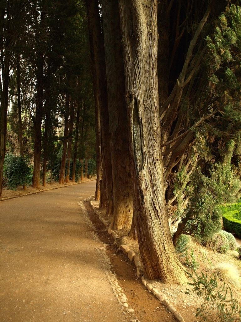 Alhambra's magic #2