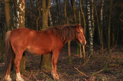 wildhorses_s