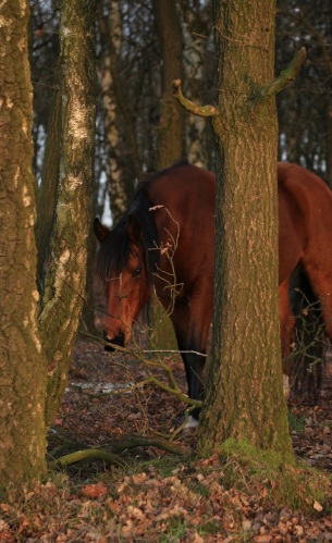 wildhorses_t